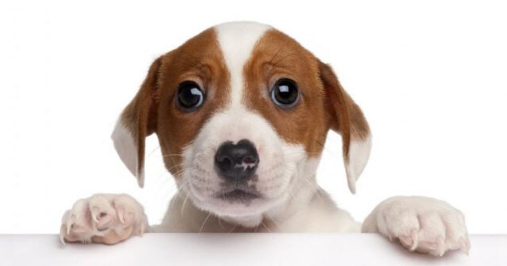 Ce-ar fi să adopți un cățeluș? 180 de prieteni te așteaptă să-i iei acasă