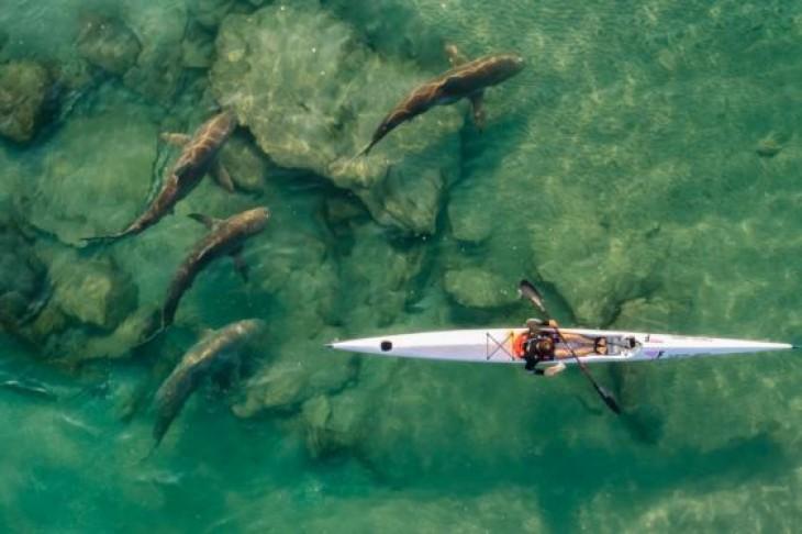 Un sportiv într-un caiac singuratic este escortat de un grup de rechini în apropiere de Hadera, Israel IDO MEIRVICH
